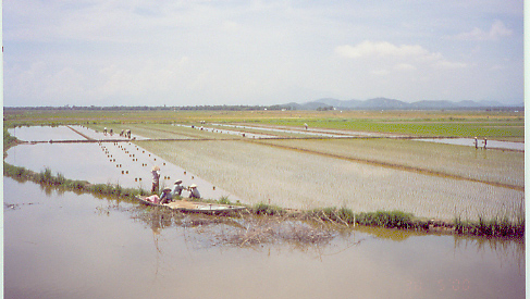 Vietnam has too many people for too little land which requires too much water (which it has) for rice.