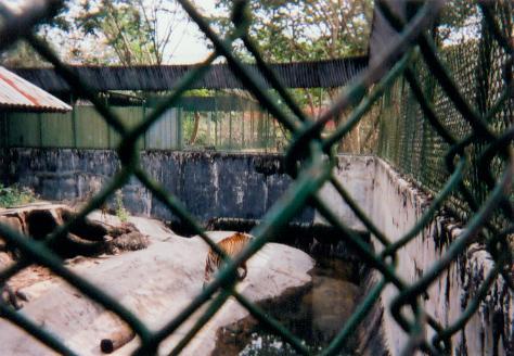 Thulakhom Zoo, outside Vientiane